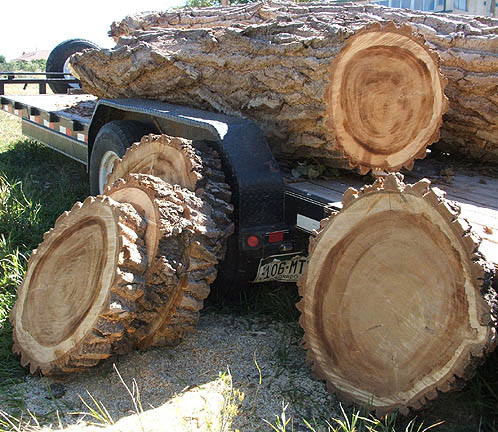 slices from logs on trailer