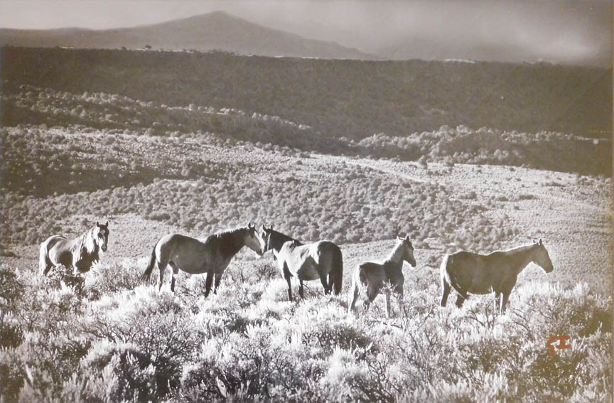 Virginia Hasenack - Wild Horse Mesa