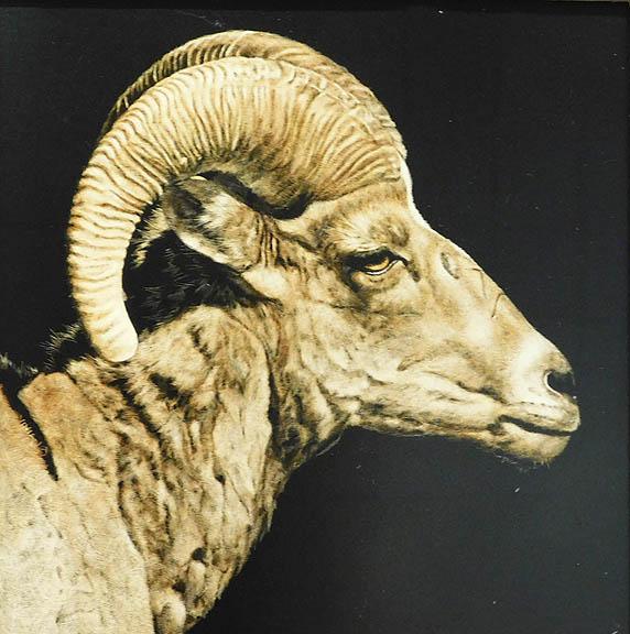 Vivian Etmanczyk - Ram Profile