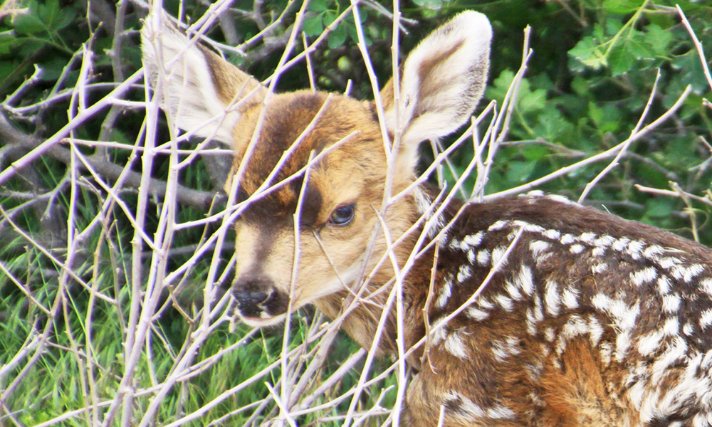 first fawn close for calendar