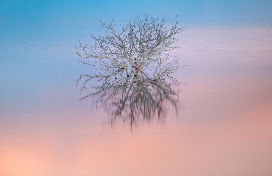 Chris May Tree Dream