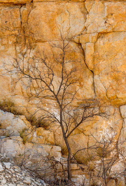 Jim Hanks-dead tree against rock wall